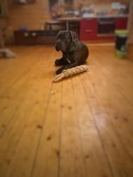 Игрушка для собак.