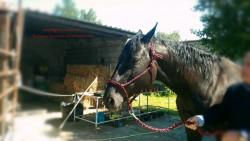 Лошадь в недоуздке.