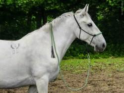 Корда для лошади 5 м.