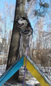 Перестежка для собак.